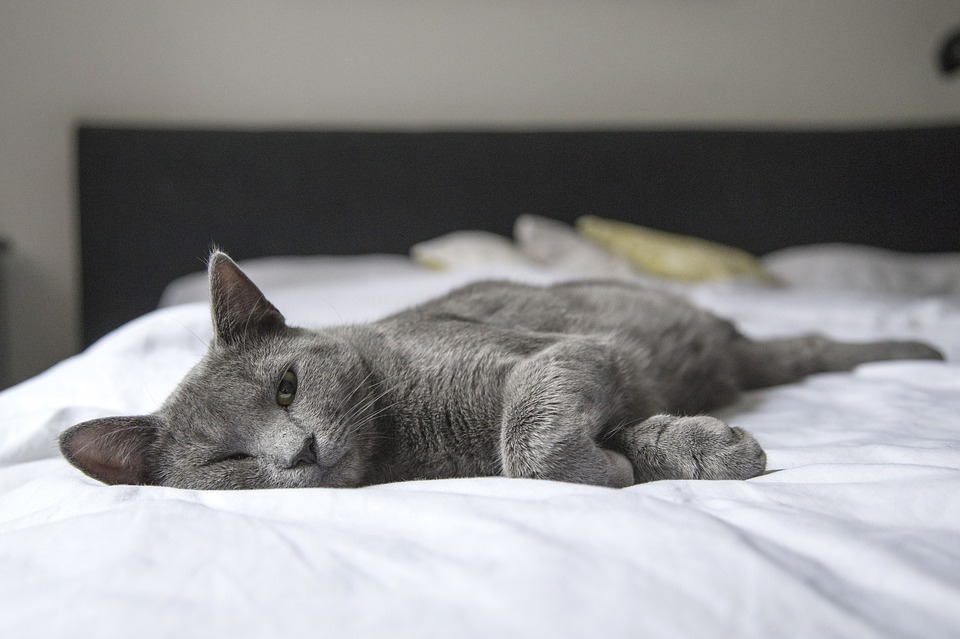 Katze im Bett 2