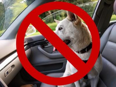 Hunde im Auto bei Hitze verboten