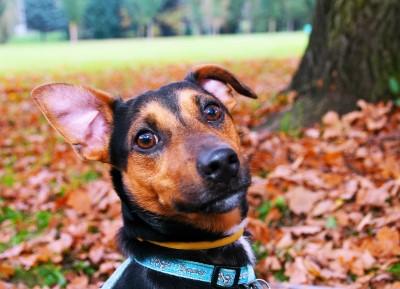 Tracker_Hund