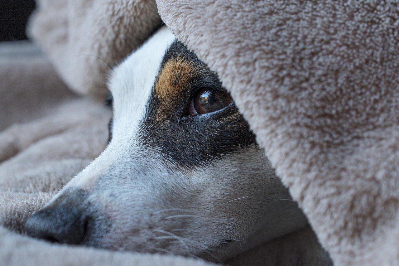 Hundebett_1