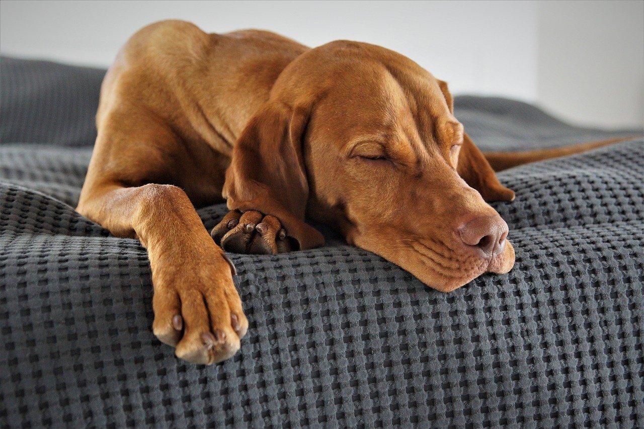 Hundebett_2