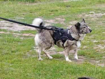 Hund - Mischling