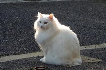 Katze - Langhaarmix