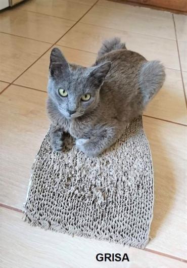 Katze - Mischling