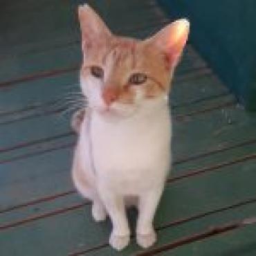 Katze - Mischlingskatze