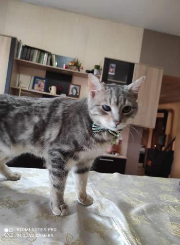 Katze - Hauskatze