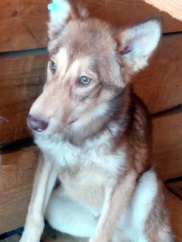Hund - Mischlingshund