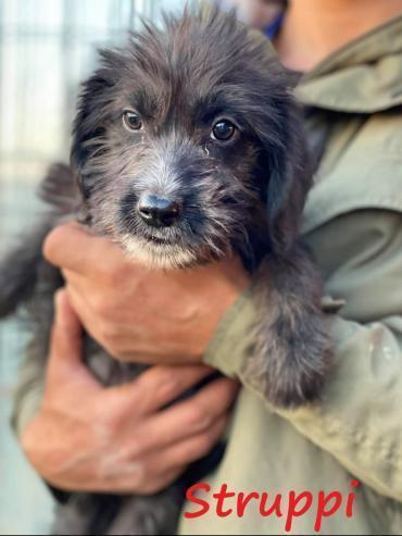 Hund - rumänischer Edelmix